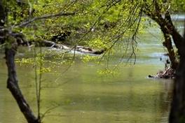 Creekside Rv Park's Creek
